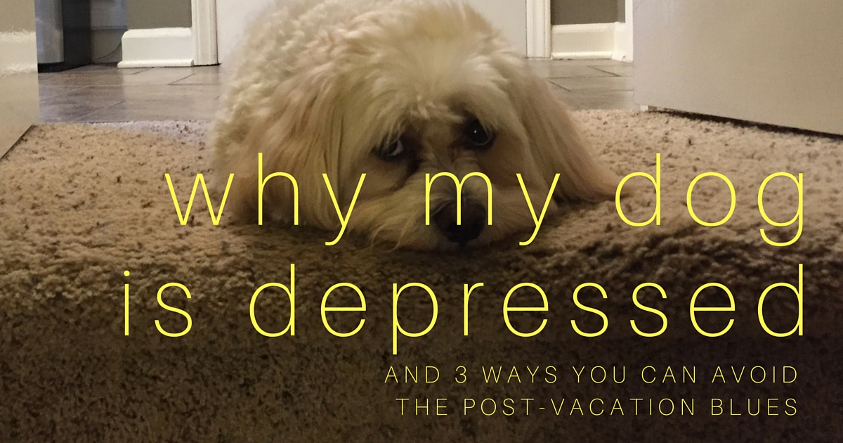 Why my dog is depressed(1)